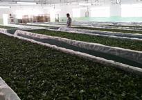 荔花村英德茶厂