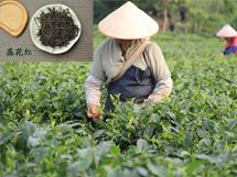 荔花村·英德红茶·荔花红