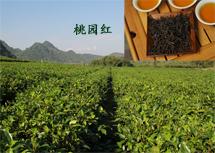 荔花村 英德红茶 桃园红
